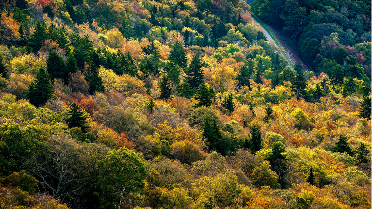 Spectrum news central nc peak of fall color approaching for nc mountains mightylinksfo