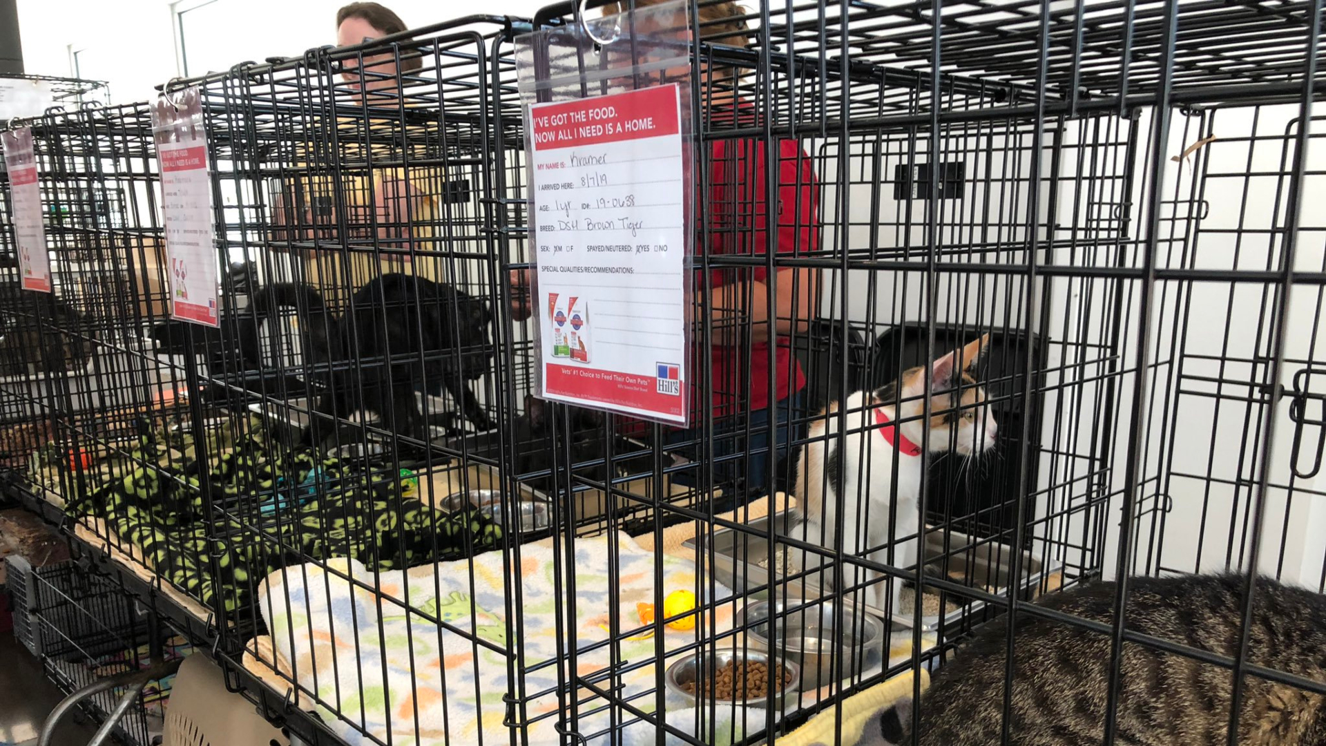 Fair Offers Chance to Adopt Pets