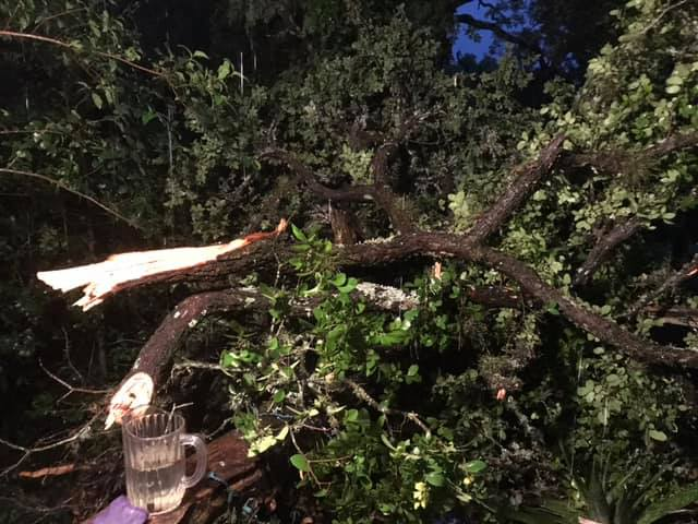 A tree was snapped in half at a home in Kyle.